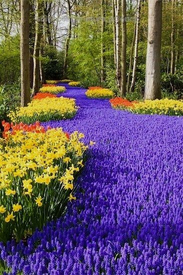 100+ best Gardens Of The World images by Scienceandnature on ...