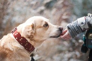 Dogs :: The Feelings of A Pet Owner