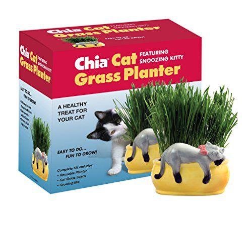 Chia Cat Grass Planter Snoozy Kitty Chia https://www.amazon.com/dp/B00NLGTMDQ/ref=cm_sw_r_pi_dp_x_uo3wybB4DBCRX