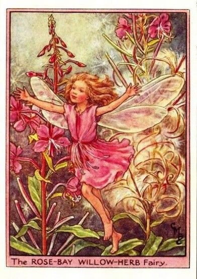 Rose-Bay Willow-Herb Flower Fairy » Flower Fairy Prints- Vintage Fairy Prints by Cicely Mary Barker for sale