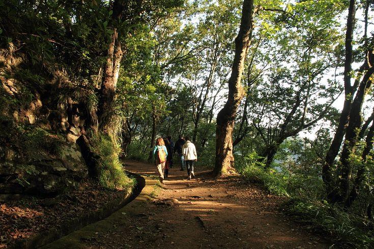 Que voir, que faire à Madère et autour de Funchal ? Voici mon top 10 ! - via Le Blog du Voyage 04.06.2015 | Madère est un petit archipel (740 km2 pour l'île principale) – mais on y trouve largement de quoi s'occuper pour deux à trois semaines de vacances tournées vers la nature, le bien-être, la relaxation ou les activités sportives. #portugal #voyages  Foto: Levadas madere rando