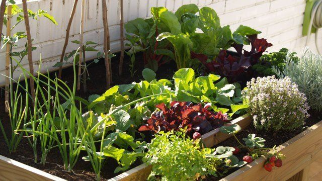 ¿Qué sembrar y plantar en junio? – bioagro blog