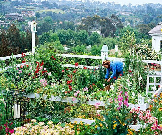 Most people think of vegetable gardens as a plot of green, leafy plants in boring rows. But that doesn't have to be the case. You can grow edible plants in a vegetable garden design that rivals the beauty of any flower garden, as the King family of Southern California has done. In a relatively small space (roughly 20x20 feet), they grow mouthwatering fruits, vegetables, and herbs -- as well as flowers./