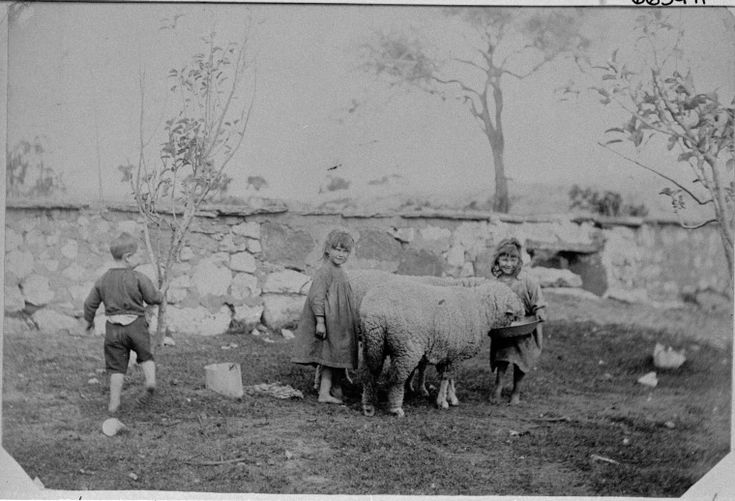 066397PD: Jimmy Russell and his sisters with pet sheep, Balladonia, ca. 1897. http://encore.slwa.wa.gov.au/iii/encore/record/C__Rb3804829__S%28children%29%20f%3Av%20y%3A%5B1860-1899%5D__P1%2C49__Orightresult__U__X3?lang=eng&suite=def
