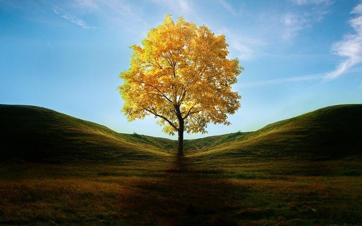 O ipê amarelo, além de ser uma bela planta é muito utilizado medicinalmente. Ele é muito eficaz contra a anemia, verminoses e até para amenizar o mal-estar que é causado pelo consumo exagerado de bebidas alcoólicas, a famosa ressaca. #reinovegetal #vegetal #amarelo #ipeamarelo #ipe #arvore #Planta #flores #jardim #ceu #azul #energia #natureza #terra #esoterismo #esoterico #holistico