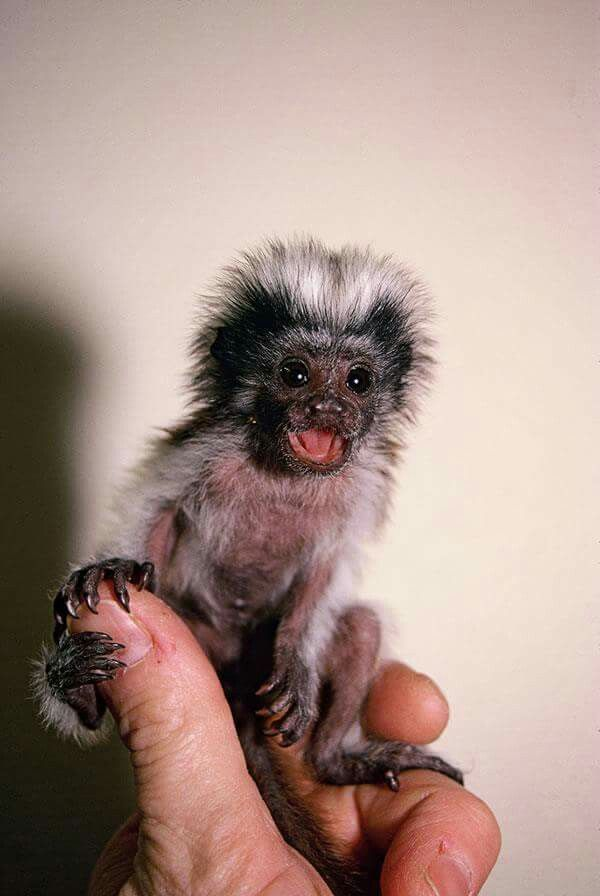 I would love to have this monkey ❤
