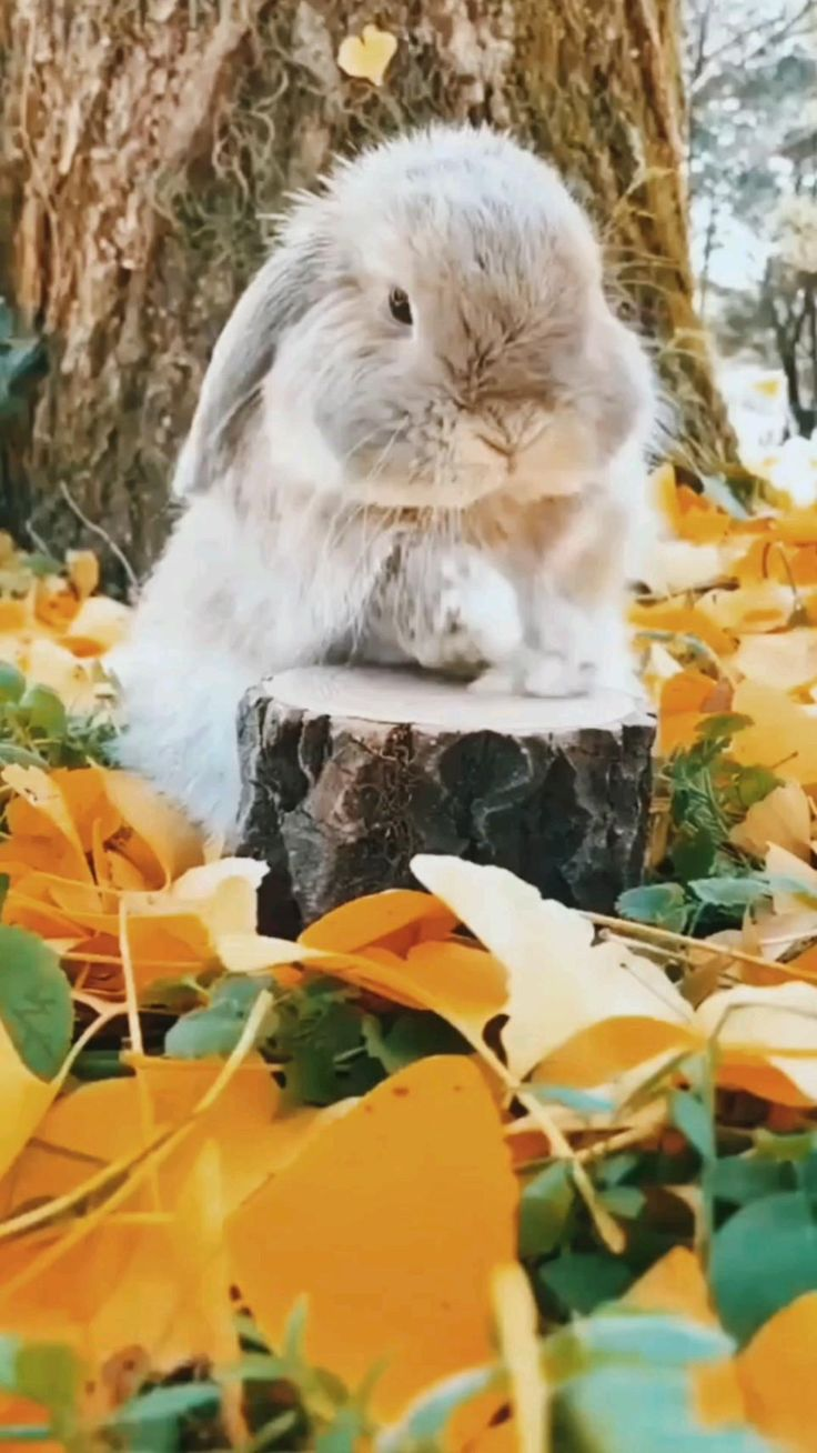 Cute Wild Animals, Baby Animals Pictures, Baby Animals Super Cute, Cute Animal Videos, Cute Little Animals, Cute Animal Pictures, Cute Funny Animals, Animals Beautiful, Animals And Pets