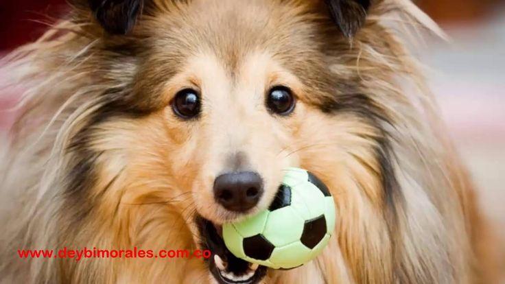 National Dog Day: 8 cosas para celebrar con tu perro