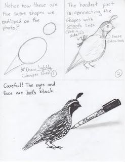 Creator's Joy: How to Draw Quail