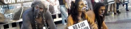 Contra la utilización de animales en los circos. Varios activistas protagonizaron diversos actos de protesta en Valencia contra la utilización de animales salvajes en los circos. Publicada en 20Minutos.