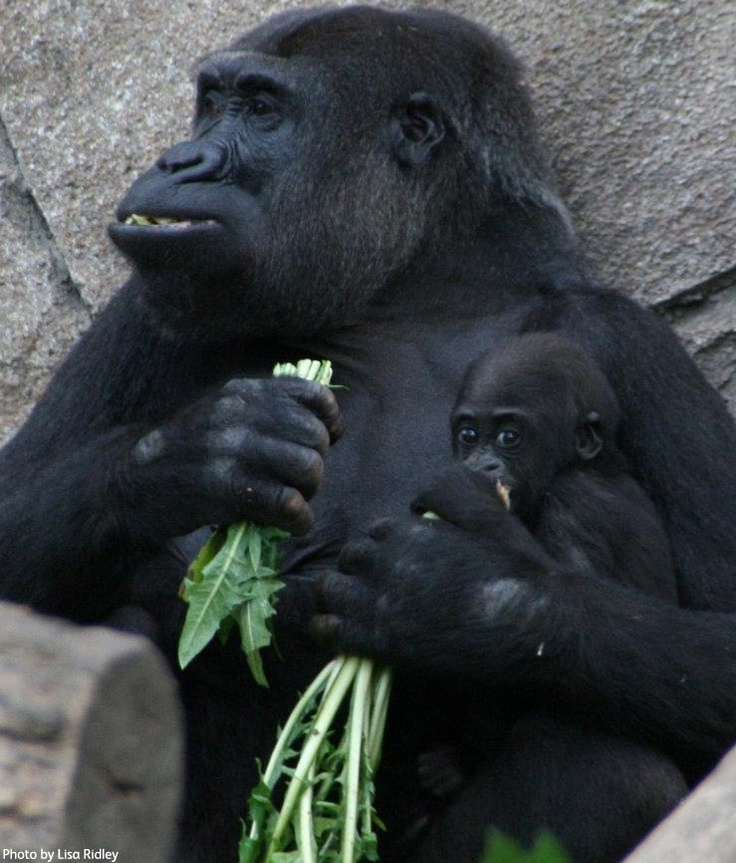 If you want to be as big and strong as mum, you have to eat your green veggies.