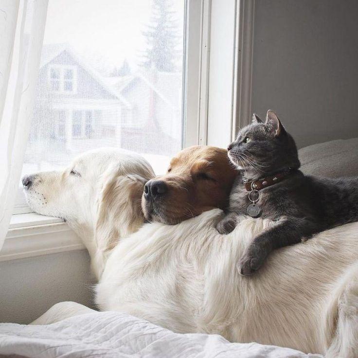 добрые животные фото картинки дома сделать более