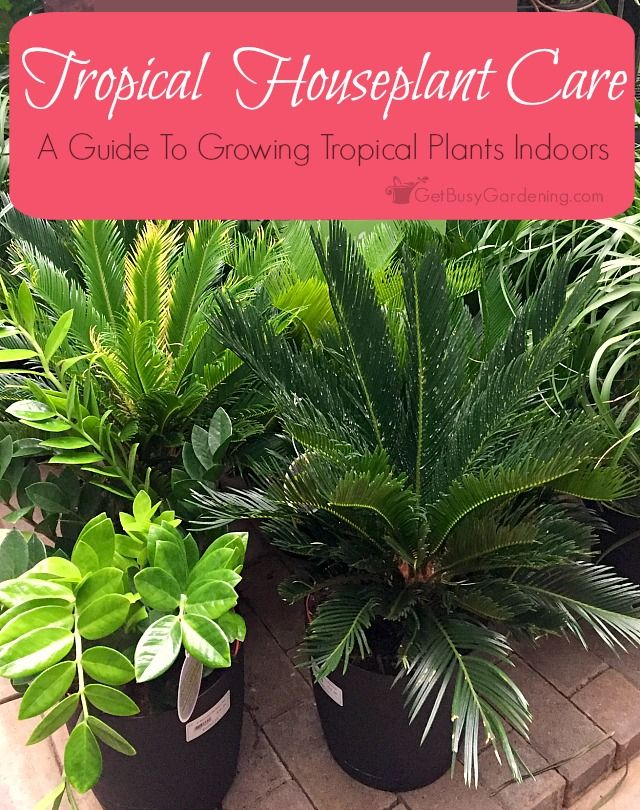 Best 25 tropical house plants ideas on pinterest - Easy to take care of indoor plants ...