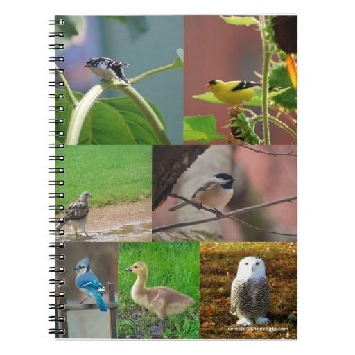 Birds of Boston Photo Collage Note Book  #bluejay #owl #falcon #school #student