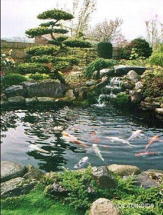 25 beste idee n over buiten vijvers op pinterest vijvers koi vijvers en achtertuin vijvers - Kleine tuin zen buiten ...