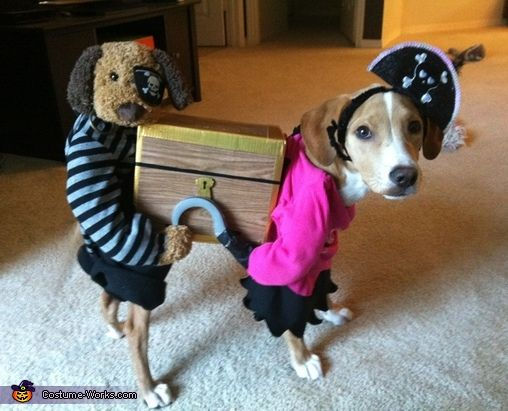 Sam: My dog Riley is wearing this home-made pirate costume. The idea came from a friend who thought it would be funny to create. This costume cost roughly 50 dollars to...