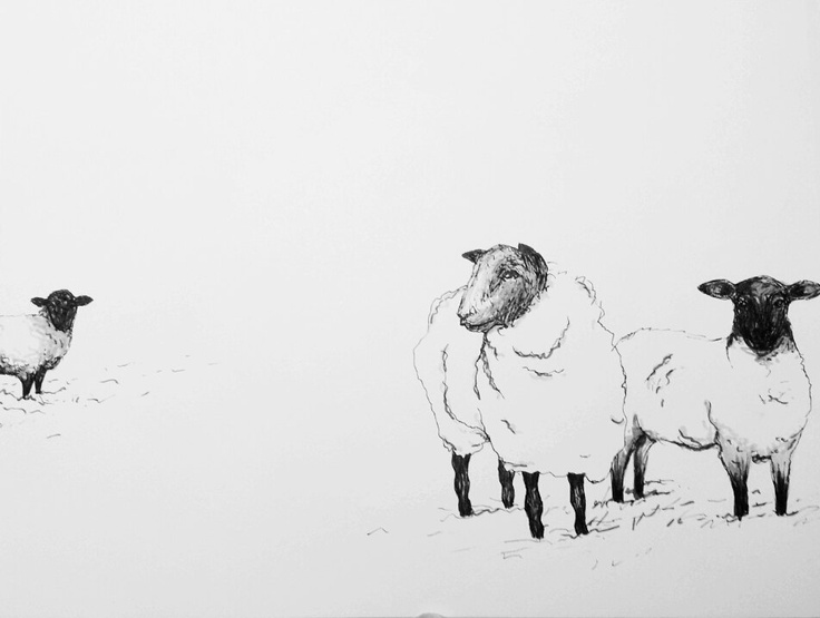 original pen drawing of one lonely sheep by villekula