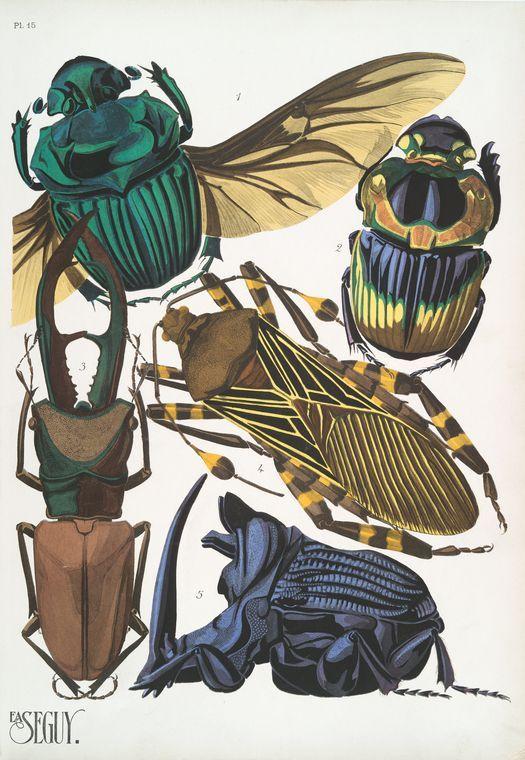 1. Phaneus conspicillatus, Brésil; 2. Phanus imperator, Argentine; 3. Cyclommatus tarandus, Bornéo; 4. Pachilis gigas, M... ([1928])