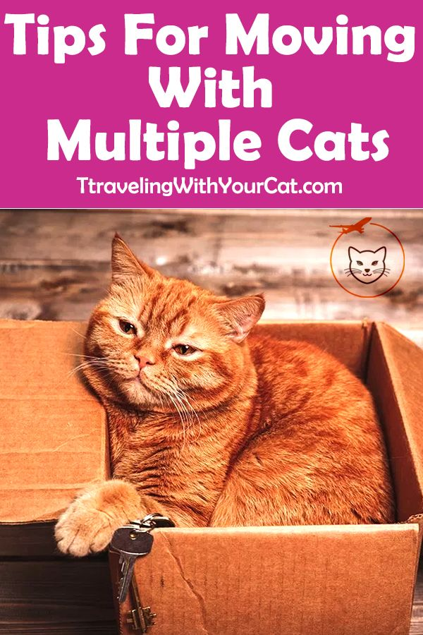 Tips For Moving With Multiple Cats Cat Travel Cats Cat Advice