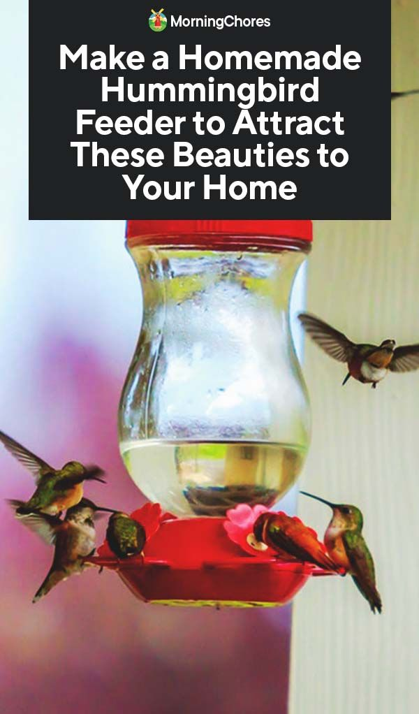 16 DIY Homemade Hummingbird Feeder Ideas That Will Attract Them To Your Home