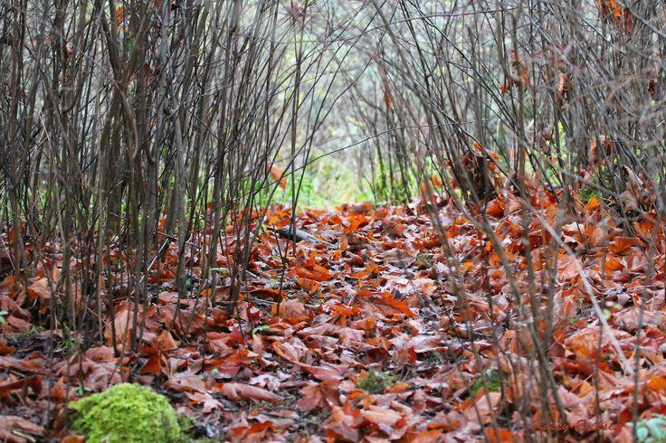 Elfin pathway | by KaseyEriksen