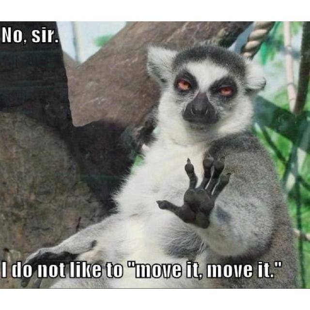 Madagascar 3 coming soonLaugh, Fun Funny, Indris Indris, Funny Stuff, Indris Brevicaudatus, Random Stuff, Humor Things, Giggles Stuff, Animal