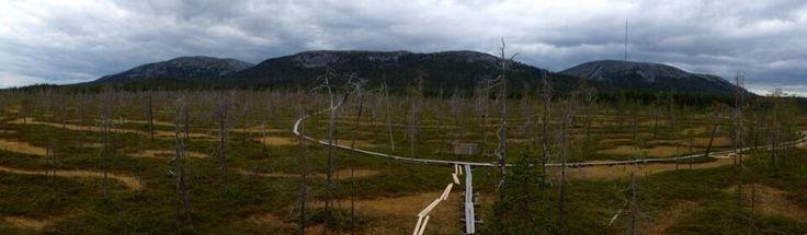 Tunturiaapa wetland in Pyhä-Luosto National Park