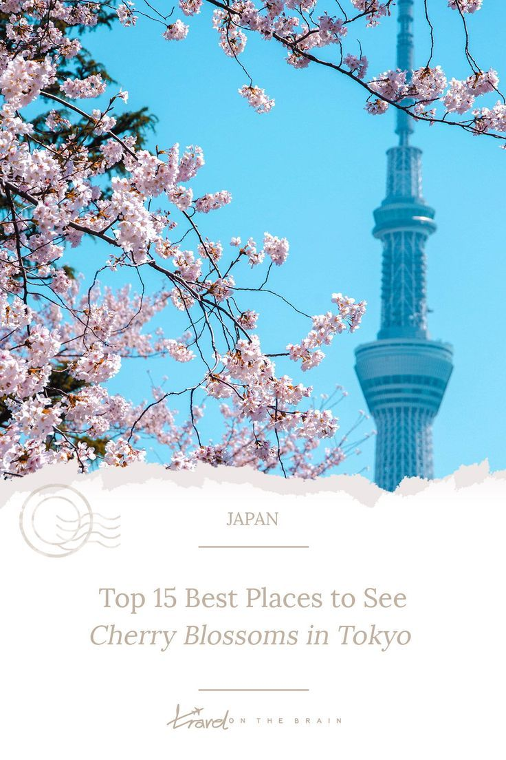 Top 15 Best Places To See Cherry Blossoms In Tokyo Free Guide Cherry Blossom Festival Tokyo Cherry Cherry Blossom
