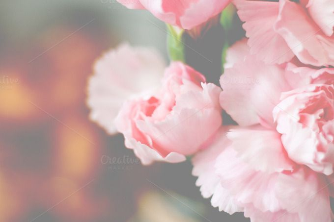 Pink flower by IDA SHOP on Creative Market