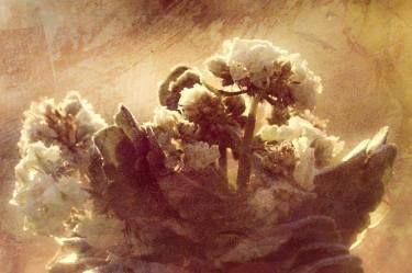 Sunrise flowers 1/10