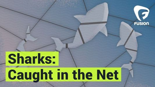 Bycatch is the accidental catch of marine animals and it accounts for half of all shark #news #alternativenews