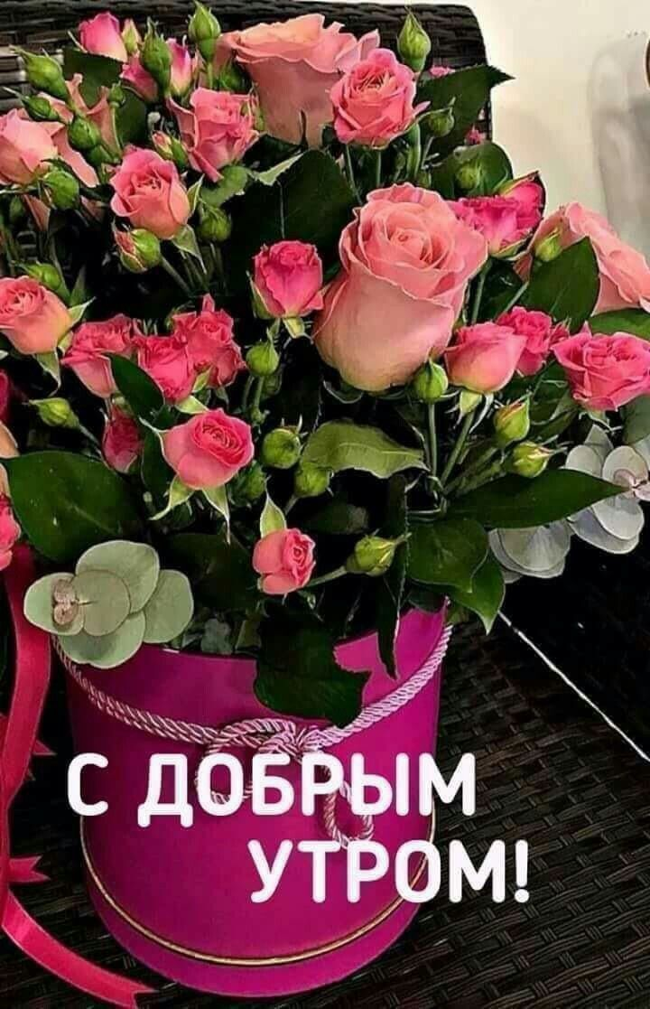 картинки доброе утро картинки красивые с розами камень