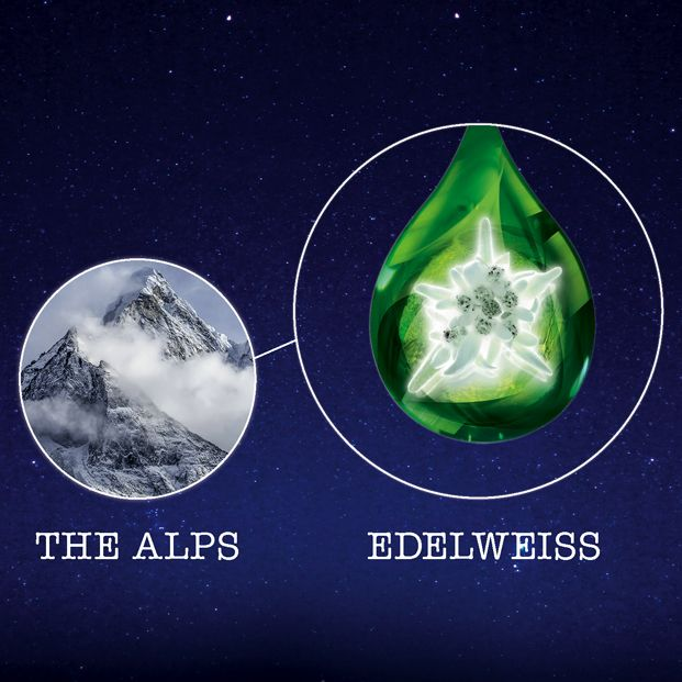 The secret? The Edelweiss plant's stem cells: this hardy flower manages to thrive in the harshest of conditions high in the Alps.