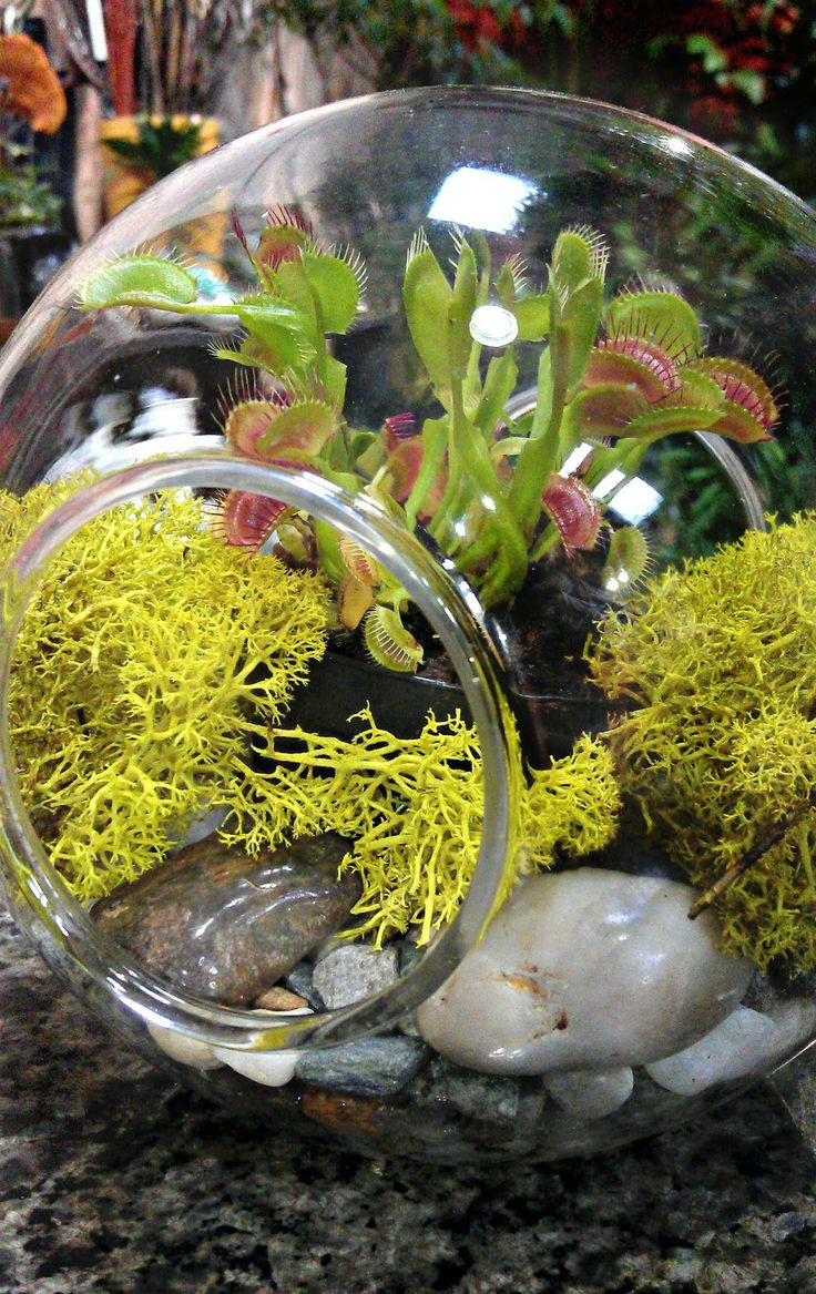 Our Favorite Plants for Terrariums - Gardening and Home Decor Blog from Hooks & Lattice
