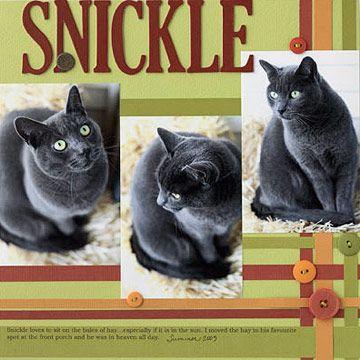 Hawaiian Pet Names For Cats