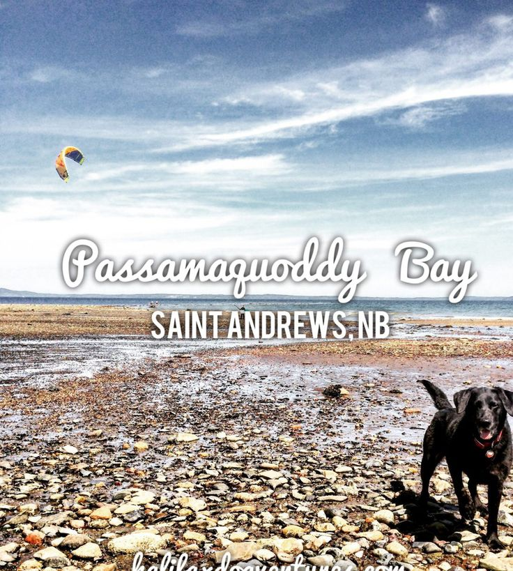 Saint Andrews, New Brunswick is a wonderfully dog-friendly town. From the Algonquin Resort to the beautiful beach at Passamaquoddy Bay, you and your dog will enjoy exploring this quaint and historic destination. halifaxdogventures.com
