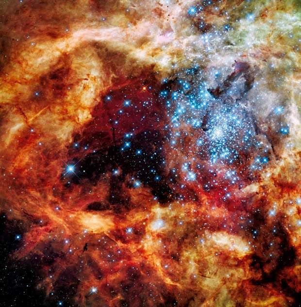 Nébuleuse de la TarentuleUn amas d'étoiles jeunes brille dans une trouée de la nébuleuse (un nuage de gaz et de poussière) de la Tarentule. « Des étoiles naissent, des étoiles meurent, dit Zoltan Levay, chargé de la publication des images du télescope Hubble. D'énormes quantités de matière sont en pleine effervescence. »