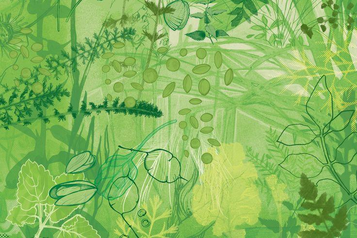 Nevermind The Burdocks - Forager, Garden Designer, Artist