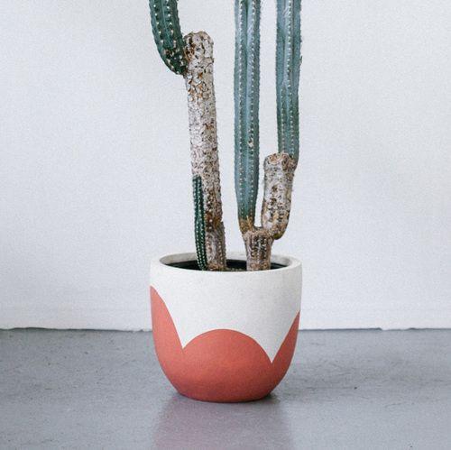 Pop & Scott 'Sangria Petal' Pot  Image bu Jessica Tremp