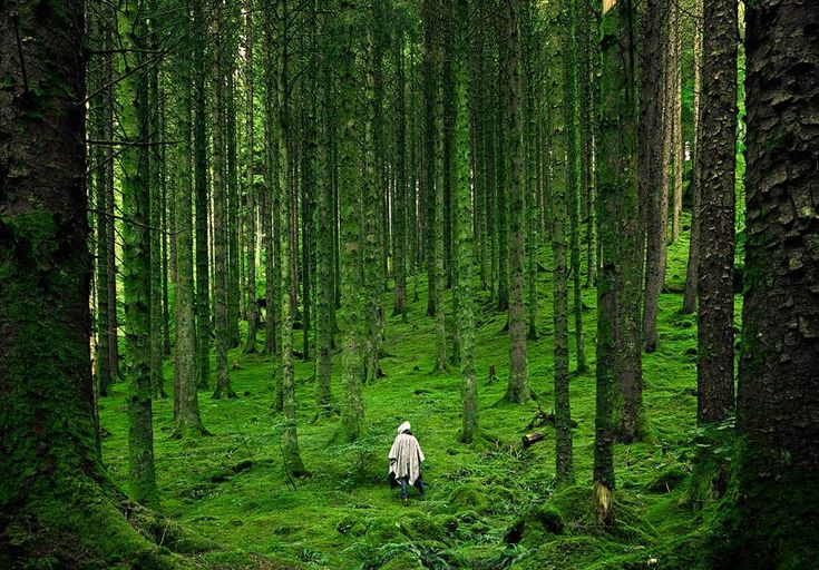 Scottish highlands, the best dog walking country...Forests, The Roads, Scotland Highlands, Scottish Highlands, National Geographic, Trees, Highlands Scotland, Places, British Isle
