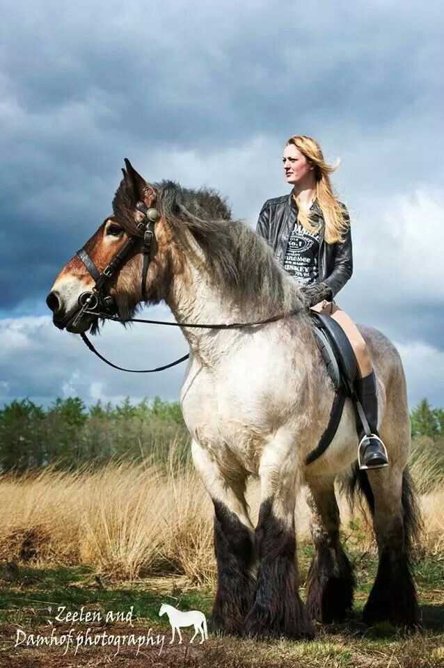 Majestic horse! Huge strong horse with beautiful coloring. He is so fuzzy! Pretty horse with girl rider. I love this horse photography!
