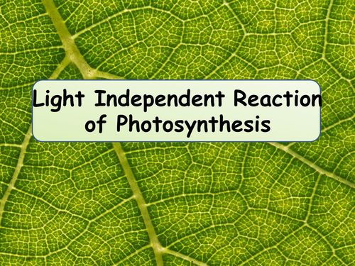 A2 Biology Calvin Cycle / Light Independent Reaction of Photosynthesis Lesson