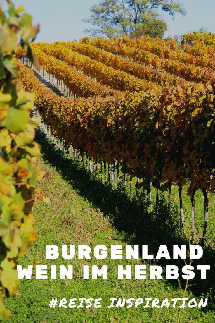 Burgenland Wein Im Herbst Einen Ausflug Wert Ist Der Neusiedler