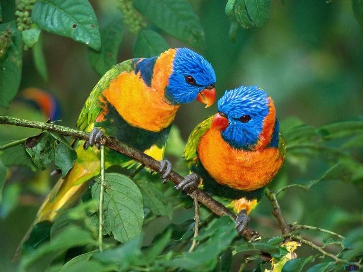 #birds #multicolour