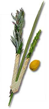 The Festival of Sukkot (Tabernacles): lulav and etrog.  Learned the blessing and ritual for Sukkot using the lulav and etrog today. So cool!