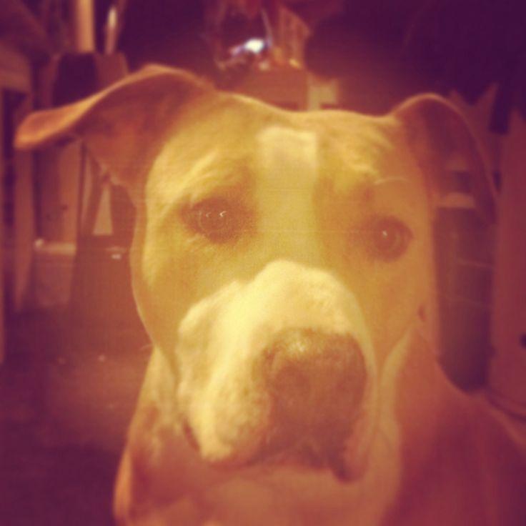 Dog by night