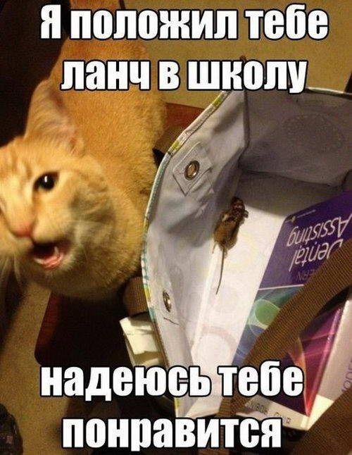 школьные приколы фото с надписями: 19 тыс изображений найдено в Яндекс.Картинках