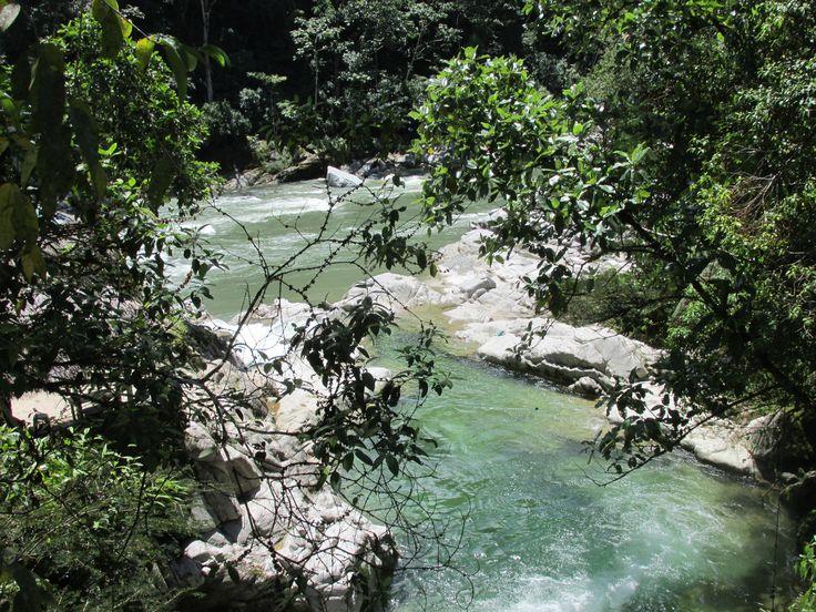 Amazonia jungle