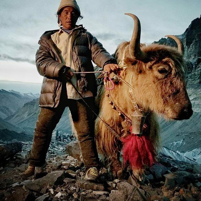 Photo @coryrichards // Dorje, a Tibetan yak herder, stands for a portrait at 19,000 ft. on the north side of Everest.  For a number of nomadic yak herders in Tibet, the Everest season provides the largest piece of annual income. With hundreds of thousands of lbs of gear and food to be moved up and down the mountain from basecamp to Advanced basecamp, the season is non stop from April thru June. This income can last individuals and families thru the year.  It's a taxing livelihood on both man…