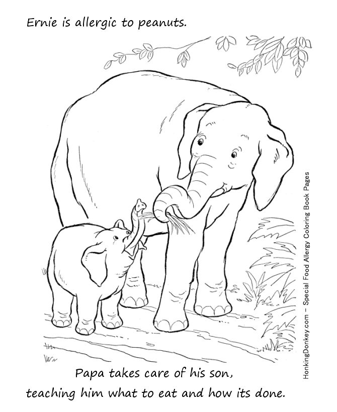 elephant with nuts coloring pages - photo#2